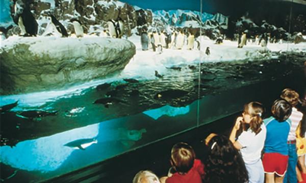 SeaWorld Penguin Exhibit